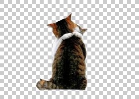 约克巧克力小猫爱拥抱,拥抱猫PNG剪贴画动物,猫像哺乳动物,食肉动图片