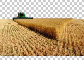 沙特阿拉伯美国农业商业小麦,秋季美丽收获四个PNG剪贴画景观,草,