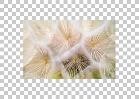 治疗基于正念的压力减少疾病冥想,蒲公英PNG剪贴画杂项,其他,花卉图片