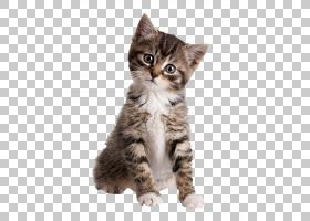 小猫狗宠物店土耳其安哥拉,赭石PNG剪贴画哺乳动物,猫像哺乳动物,