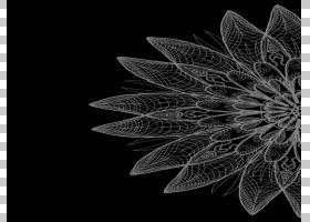 花卉对称图对称PNG剪贴画摄影,对称,单色,花卉,单色摄影,图形设计