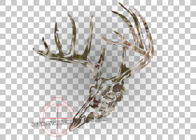 白尾鹿贴花鹿角麋鹿,头骨图案PNG剪贴画鹿茸,动物,贴纸,鹿,墙贴花图片