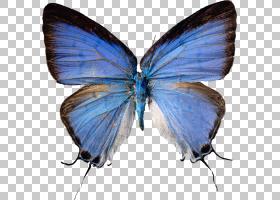 Butterfly Farfel Farfalle,万圣节海报PNG剪贴画公司,刷脚蝴蝶,
