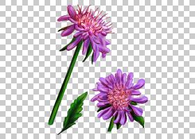 野花切花图形小说植物群,花PNG剪贴画紫色,漫画,紫罗兰,一年生植图片