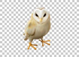 猫头鹰鸟,困PNG剪贴画动物,摄影,动物群,猫头鹰,动物,鸟,可爱,羽图片