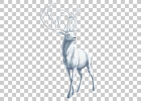 红鹿麋鹿驯鹿鹿角,白鹿,白鹿PNG剪贴画哺乳动物,动物,脊椎动物,动