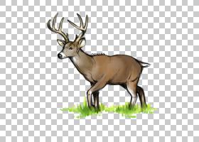 白尾鹿麋鹿驯鹿鹿角,白鹿PNG剪贴画鹿茸,哺乳动物,动物,动物群,野图片