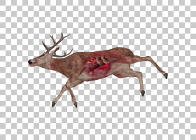驯鹿白尾鹿动物麋鹿,亲爱的PNG剪贴画鹿茸,哺乳动物,动物,动物群,图片