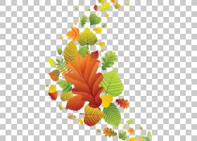 桌面秋天,秋天PNG剪贴画叶,分支,花卉,桌面壁纸,水果,植物,性质,