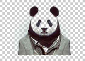 动物园肖像时尚摄影动物熊猫PNG Clipart杂项,动物,食肉动物,摄影图片