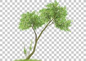 书籍水彩画,草,分支,木本植物,花盆,室内植物,灌木,叶,植物,班农