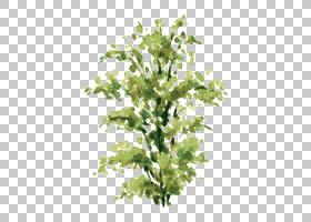树木水彩画,细枝,植物茎,分支,叶,植物,绘画,树,绘图,灌木,水彩画