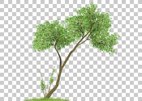 书籍水彩画,草,分支,木本植物,花盆,室内植物,灌木,叶,植物,普吉