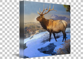 麋鹿驯鹿鹿角画廊包装,麋鹿PNG剪贴画鹿茸,哺乳动物,动物,动物,野图片