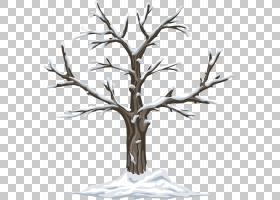 黑白花,黑白,细枝,分支,木材,木本植物,树,花,植物,绘图,夏天,冬