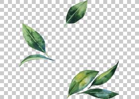 绿叶水彩画,分支,植物茎,植物,绿色,绘画,水彩画,花,叶,