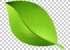 绿叶水彩画,材质,植物,搜索引擎,水彩画,绿色,纹理贴图,叶,