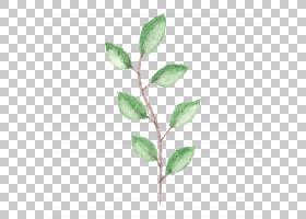 绿叶水彩画,植物茎,绿色,树,植物,绘图,分支,油漆,绘画,细枝,叶,