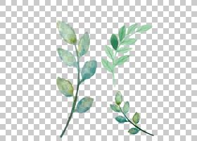 花卉图案背景,细枝,植物茎,分支,绿色,树,模式,叶,植物,水彩画,花