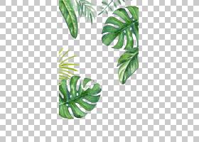 水彩图案,植物茎,树,花盆,模式,叶,iPhone,移动电话,iPhone 6,针