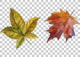 秋叶画,枫叶,枫树,植物,树,秋叶颜色,秋季,水彩画,绘画,叶,绘图,