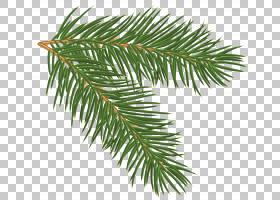 圣诞树水彩画,细枝,紫杉家族,云杉,针叶树,常绿,圣诞装饰品,植物,