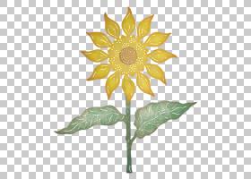 装饰艺术视觉设计元素和原则向日葵叶PNG剪贴画摄影,向日葵,植物
