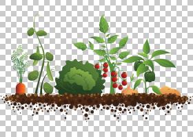 社区园艺屋顶花园果园番茄树多彩多姿的蔬菜PNG剪贴画树枝,番茄,图片
