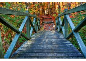 桥梁,桥梁,秋天,季节,自然,叶子,森林,壁纸,
