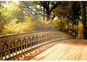 桥梁,桥梁,秋天,木材,壁纸,