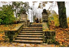 楼梯,叶子,壁纸,