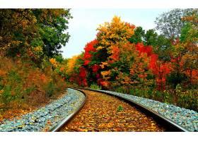 铁路,秋天,季节,自然,叶子,森林,壁纸,