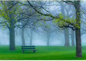 工作台,风景,风景优美的,雾,公园,草,树,秋天,壁纸,