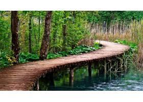 木板路,桥梁,壁纸,