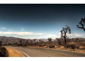 路,公园,树,沙漠,麋鹿,壁纸,图片