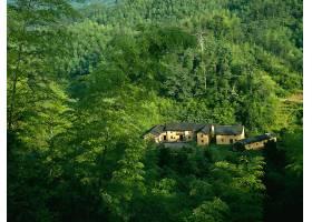 房子,建筑物,森林,绿色的,树,壁纸,