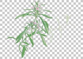 夏花背景,草,树,美味,植物繁殖,花,薰衣草,草药,根,叶,薄荷,龙蒿,