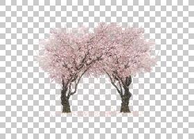 夏花背景,霜冻,细枝,冬天,花,草,分支,植物,木本植物,春天,樱桃,