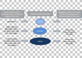 组织媒体,软件,技术,沟通,材质,文本,媒体,Microsoft Azure,图,线