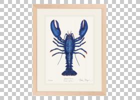 水彩动物,人,龙虾,红龙虾,作为食物的小龙虾,海鲜,食物,龙虾陷阱,