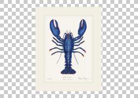 水彩卡通,海鲜,十足,电蓝,鱼,贝类,虾,绘画,东方牡蛎,水彩画,Pali