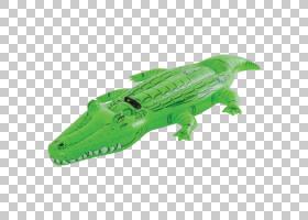 鳄鱼卡通,鳄鱼,动物形象,爬行动物,动物,游泳池,鳄鱼,鳄鱼,图片