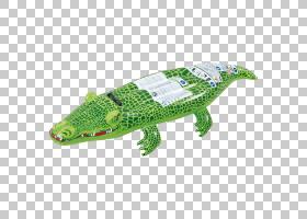 鳄鱼卡通,鳄鱼,爬行动物,普兰什贝肯,孩子,游戏,泳池面条,游泳圈,图片
