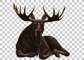 动物卡通,喇叭,销售人员,野生动物,动物,鹿角,麋鹿,驯鹿,Roe Deer图片
