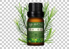 茶树油,草药,草药,植物,液体,橘子油,薰衣草油,木箱,天然护肤,化
