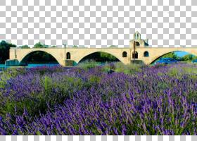 花田,景观,草,场,草族,紫色,农场,花,植物,草甸,法国,薰衣草,Prov