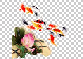 水彩花卉背景,花,花瓣,鲤鱼,水墨画,海报,观赏鱼,墨水,水彩画,鲤
