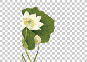 水彩花卉背景,草本植物,一年生植物,植物茎,切花,花瓣,叶,植物,水