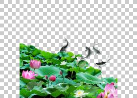 绿草背景,草,一年生植物,绿色,花,神圣莲花,水,莲花族,水生植物,