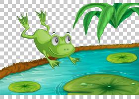 绿草背景,草,绿色,叶,树蛙,卡通,青蛙,图片